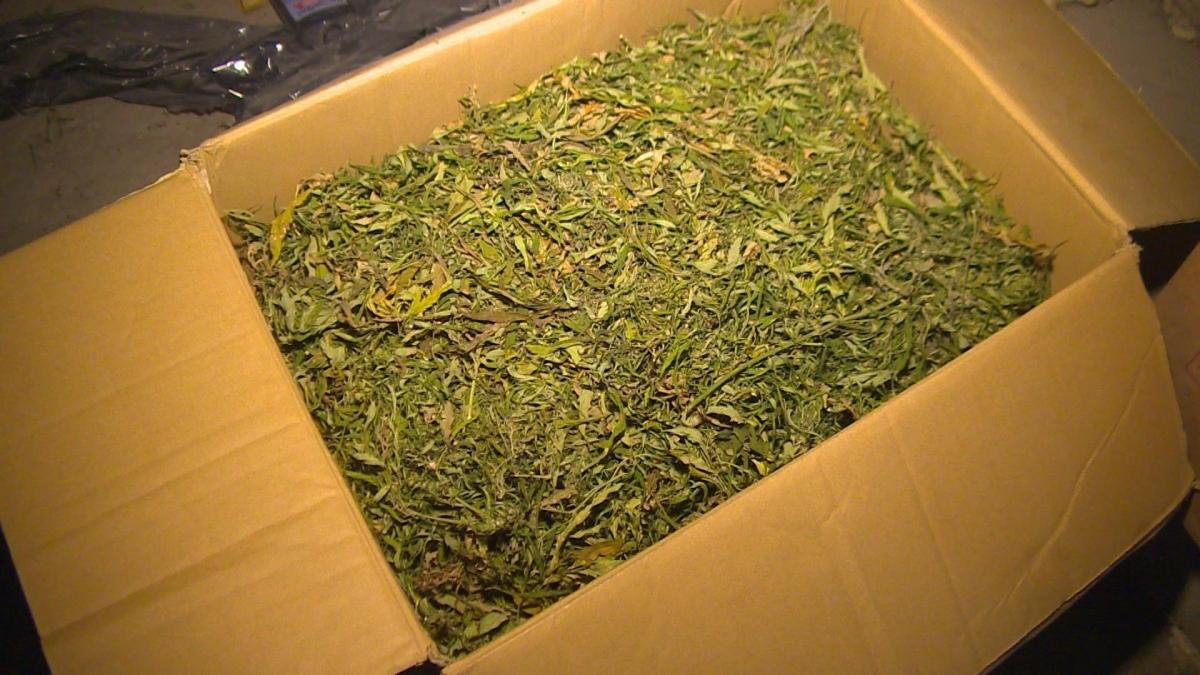 Марихуана сколько стоит оборудование для производства целлюлозы из конопли