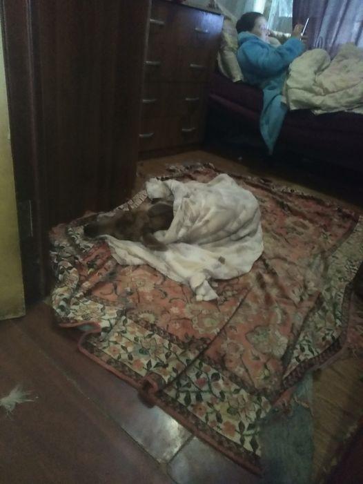 Зоозащитники выходили 3-дневного лосенка, оставшегося без матери