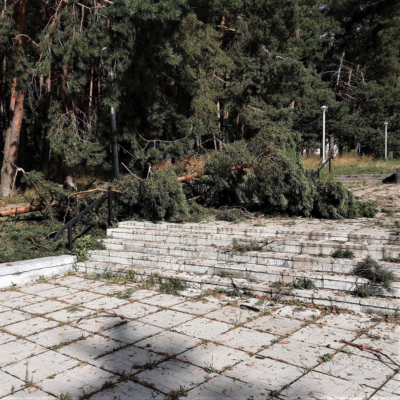 Сегодня ночью на Жуковский район обрушился ураган